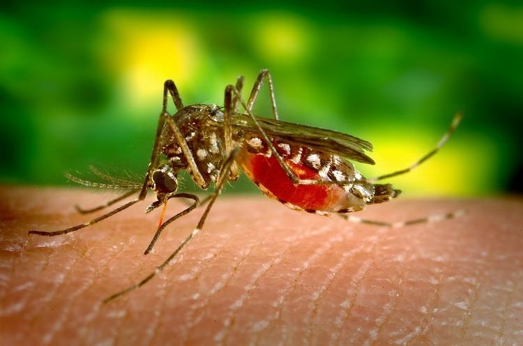 Beware the Zika virus